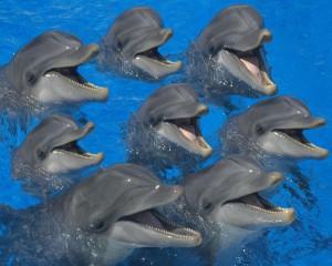 delfinárium nyaralás Bulgáriában
